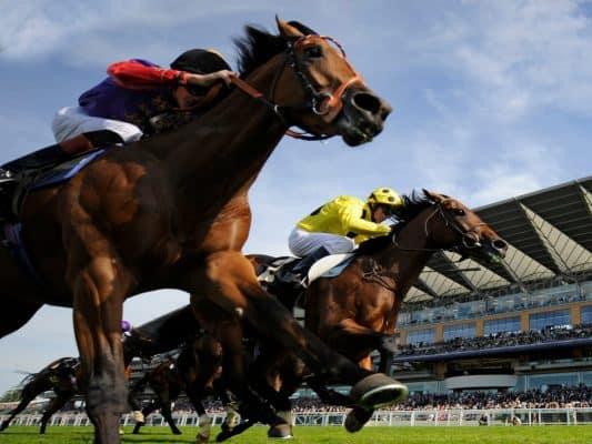 Corridas de cavalos 535089